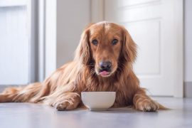 What Are The Ways To Feed Your Dog?